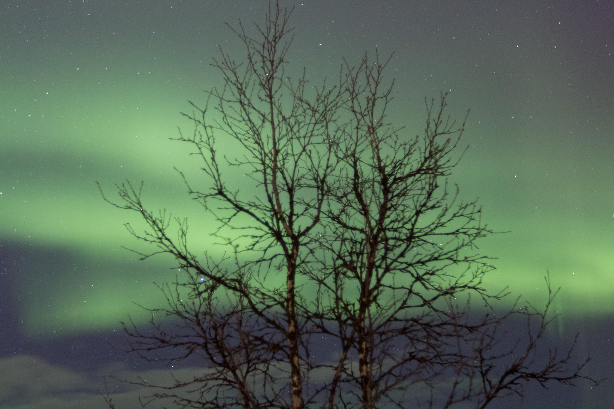 Aurora Borealis, norrsken Northern lights in Kiruna, Sweden